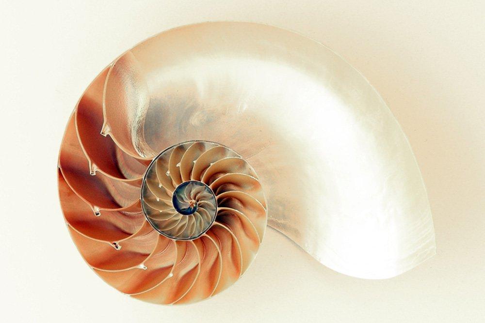 Sea shell image